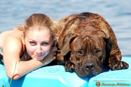 Собаководства